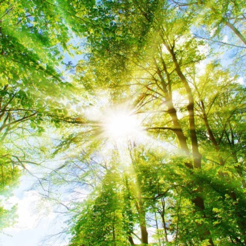 Picture of sun shining through a canopy of trees
